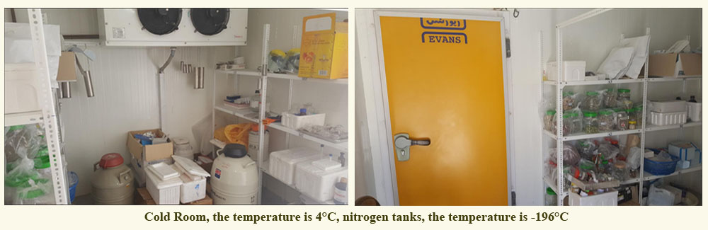 Cold Room Department